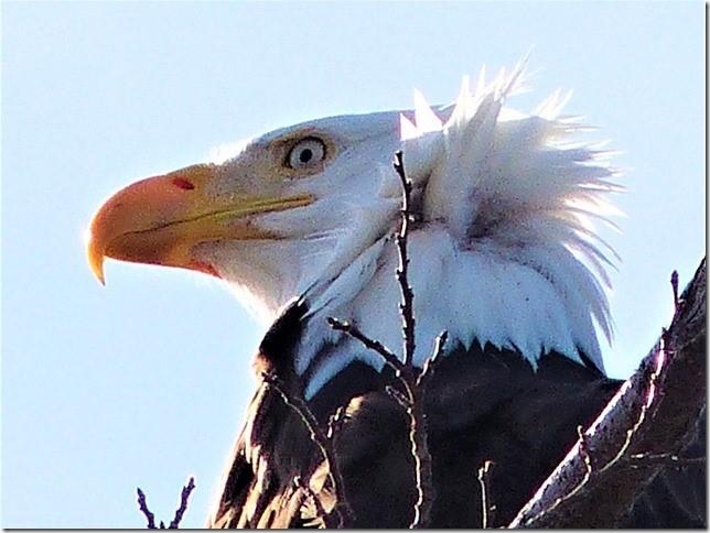 Eagles5