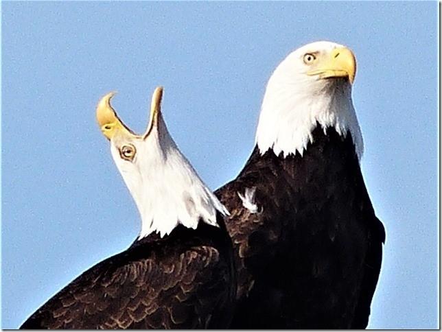 Eagles1