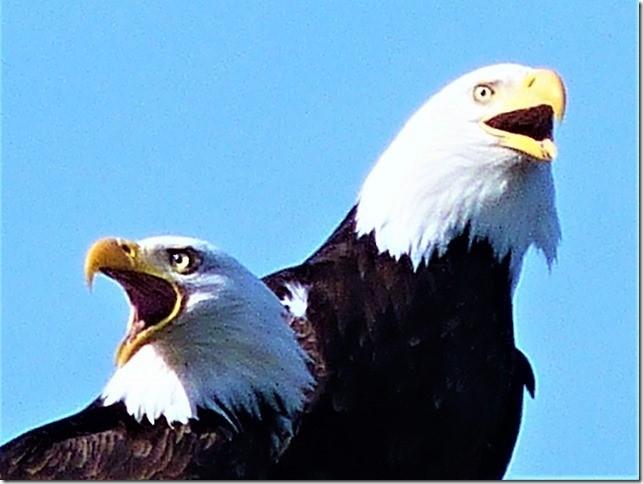 Eagles7