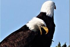 Eagles6
